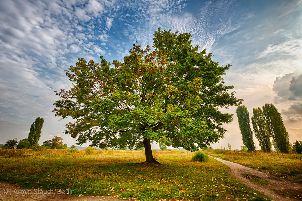 HDR shoot of a marple tree in a park