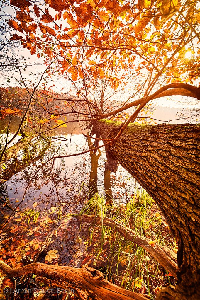 fallen autumn tree in a lake