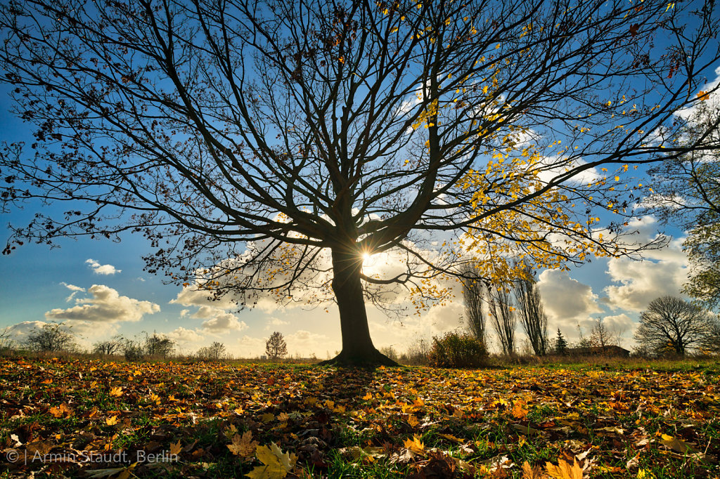 silhouette of a beautiful tree with autumn leaves