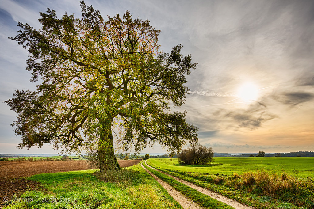 hdr shoot of a lime tree near a road and fields in autumn