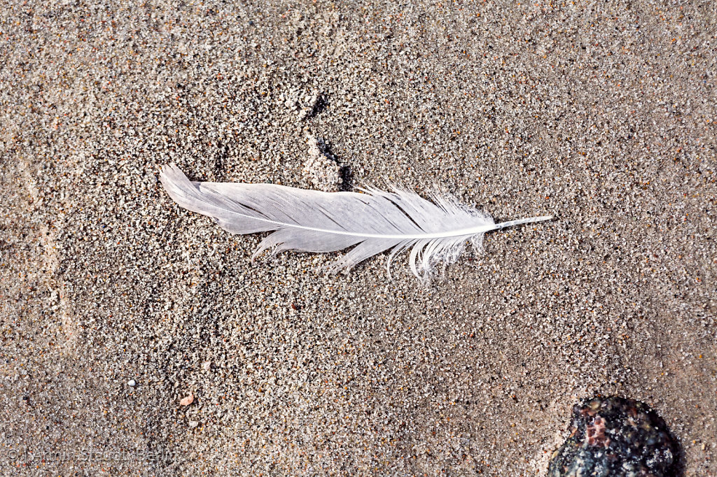 macro of an old feather laying on a beach